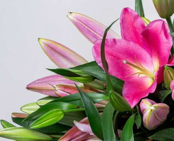 Birthday Flowers Delivery - same day throughout Auckland
